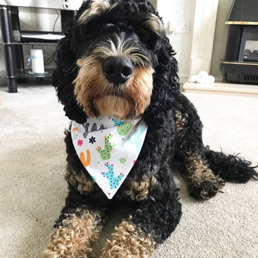dog in cute pet bandana