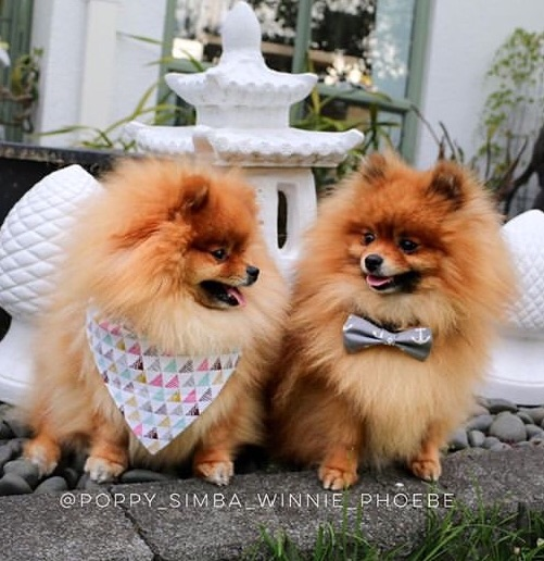 dogs wearing patterned bandana and grey dog bow tie