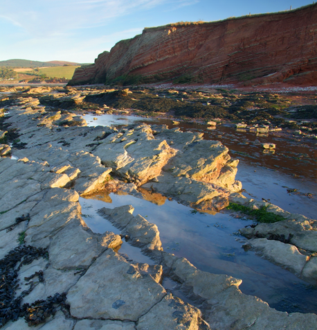 fossil beach watchet near Minehead Somerset