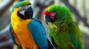 Lincolnshire wildlife park - parrot sanctuary