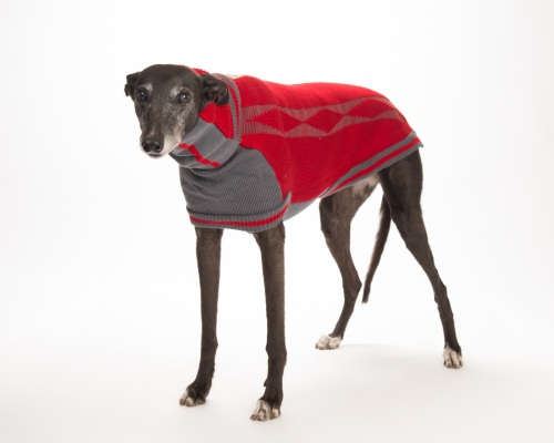Diamond Sweater: Crimson Red/Grey for Greyhounds