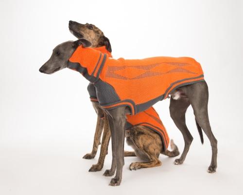 Diamond sweater: Orange/Grey for Whippets