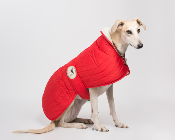 Crimson Red Quilted Jacket for Greyhounds
