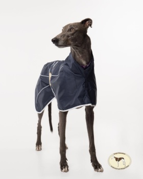 New Colour!! Navy Blue Rain Mac for Greyhounds