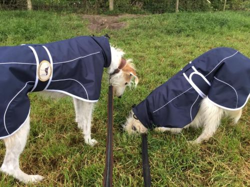 Navy Blue Rain Mac for Italian Greyhounds