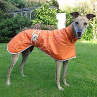 Orange Rain Mac for Italian Greyhounds