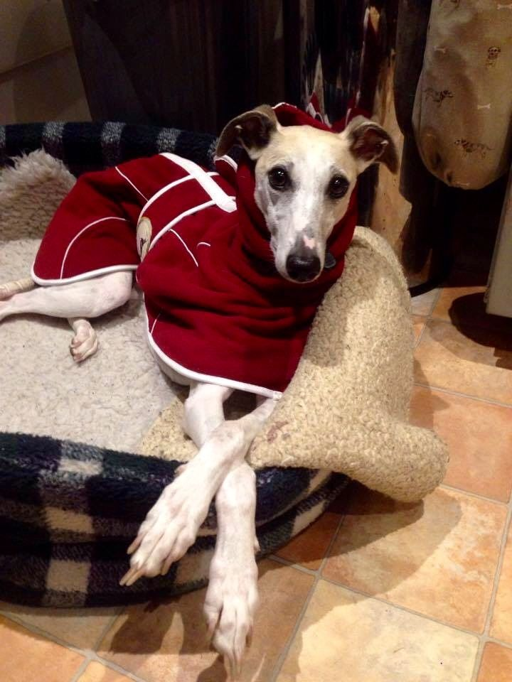 Burgundy Fleece Housecoat for whippets