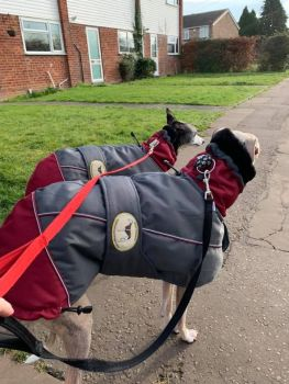 **NEW** Winter Jacket Dark Grey/Burgundy for Greyhounds