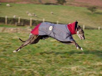 **NEW** Jacket; Dark Grey/Burgundy for Whippets