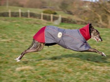 **NEW** Jacket; Grey/Burgundy for Greyhounds