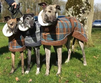 Maple Tweed Coat for Greyhounds ** NEW IN **
