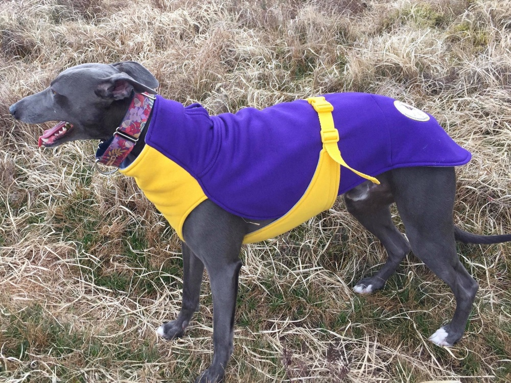 Sweat/Tee Shirt for Greyhounds, Bright Purple & Yellow.