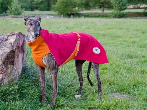 Sweat/Tee Shirt for Greyhounds, Hot Pink & Orange