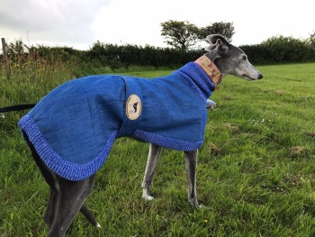 Denim/Knit Sweaters for Greyhounds