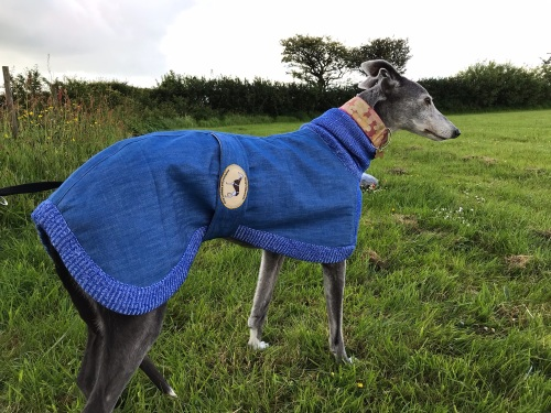 Denim & Knitted Sweaters for Greyhounds