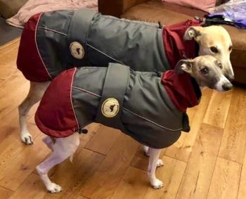 Waterproof Padded Luxury Jacket; Grey/Burgundy for Greyhounds
