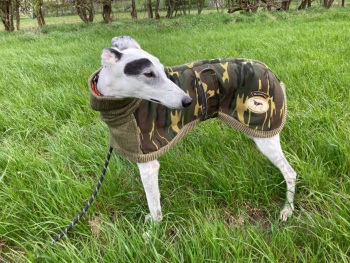 Camo-Knit Coat for Greyhounds