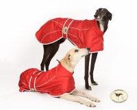 Crimson Red Rain Mac for Italian Greyhounds