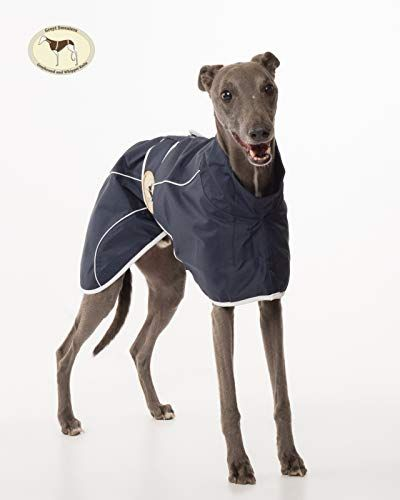 Navy Blue Rain Mac for Italian Greyhounds