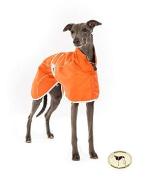 Orange Rain Mac for Italian Greyhounds