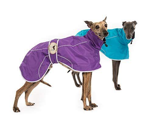 Purple Rain Mac for Italian Greyhounds