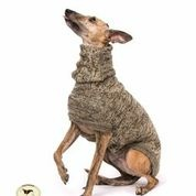 Brindle Sweater: Chocolate Brown/Beige for Whippets