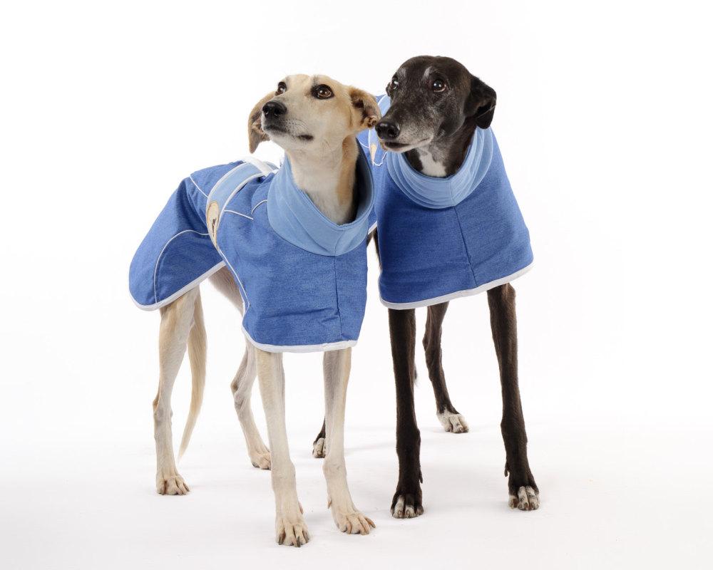 Stonewashed, Faded Blue Denim Coat for Greyhounds