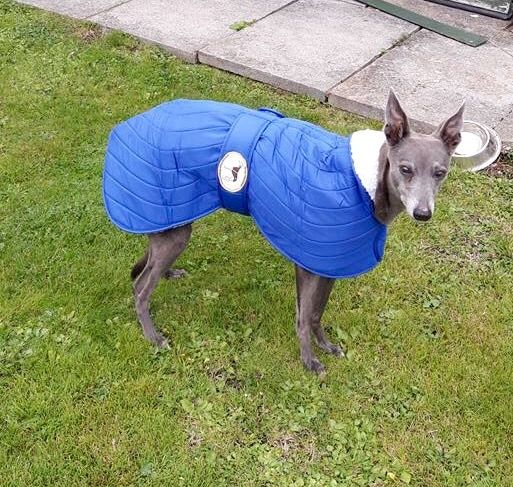 Waterproof Quilted Jackets for Italian Greyhounds