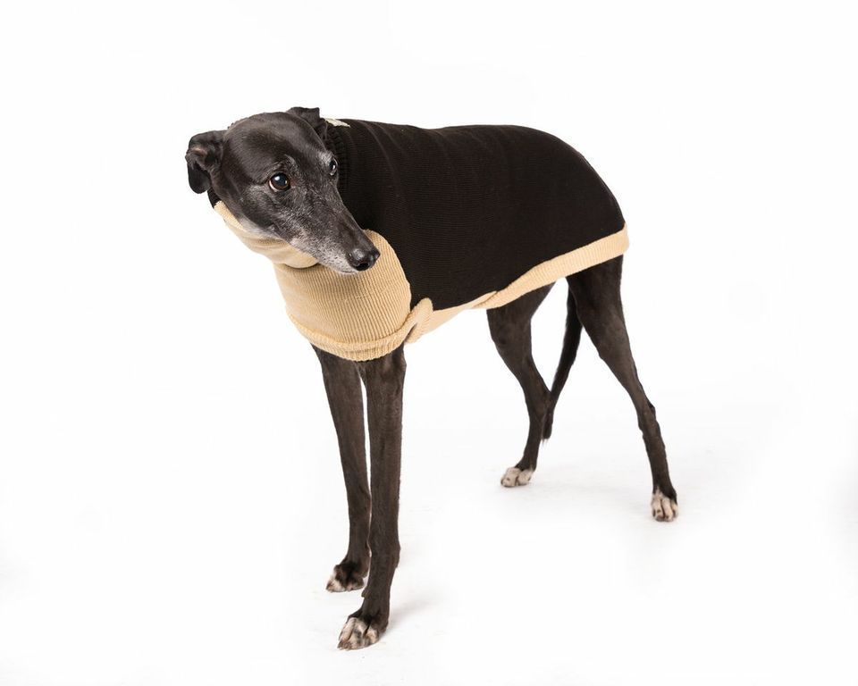 Knitted Sweaters for Italian Greyhounds