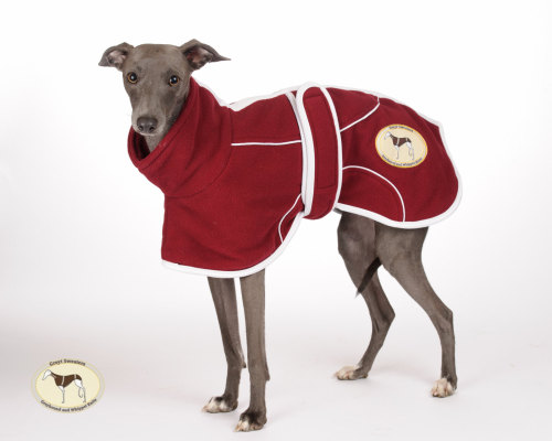 Burgundy Fleece Housecoat Italian Greyhounds