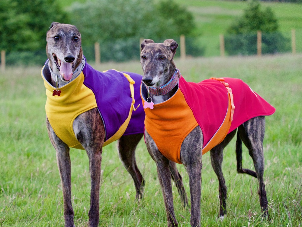 Sweat/Tees for Greyhounds & Whippets