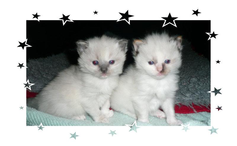 kittens20023