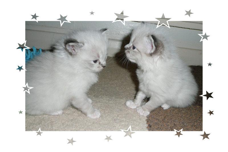 kittens2002