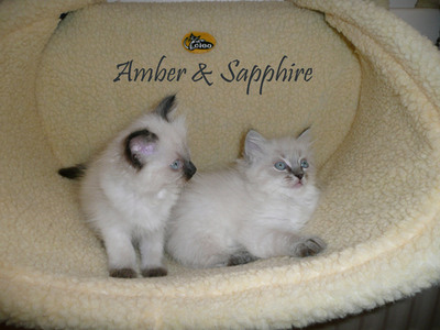 amber and sapphire