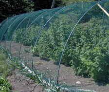the raspberry cage