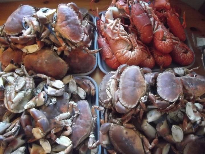 tashas shellfish