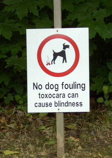 Toxocaeria sign