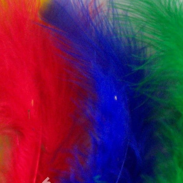 Assorted Feathers