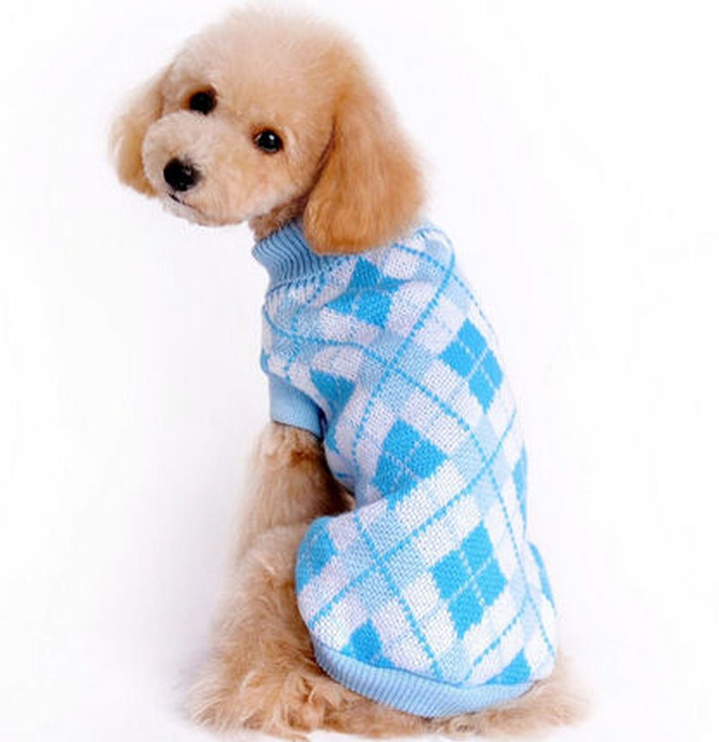 Small Dog Sweater in Blue