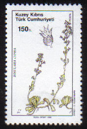 North Cyprus Stamps SG 293 1990 150TL Rosularia Cypria - MINT