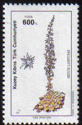 North Cyprus Stamps SG 296 1990 600TL Sedum Lampusae - MINT