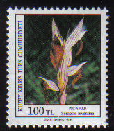 North Cyprus Stamps SG 311 1991 100TL Orchids Serapias Levantina - MINT