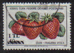 North Cyprus Stamps SG 075 1979 1tl - USED (G108)