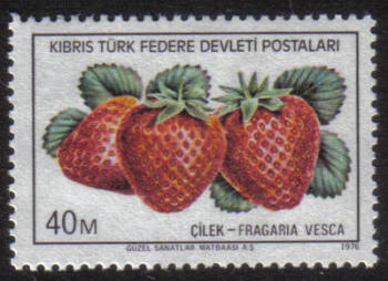 North Cyprus Stamps SG 031 1976 40m - MINT