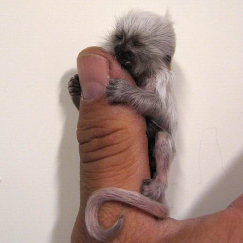 monkeu/thumb