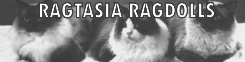 Ragtasia Ragdolls, site logo.