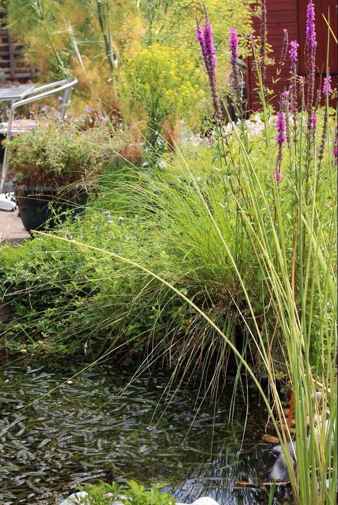 green centre brighton recycling pond