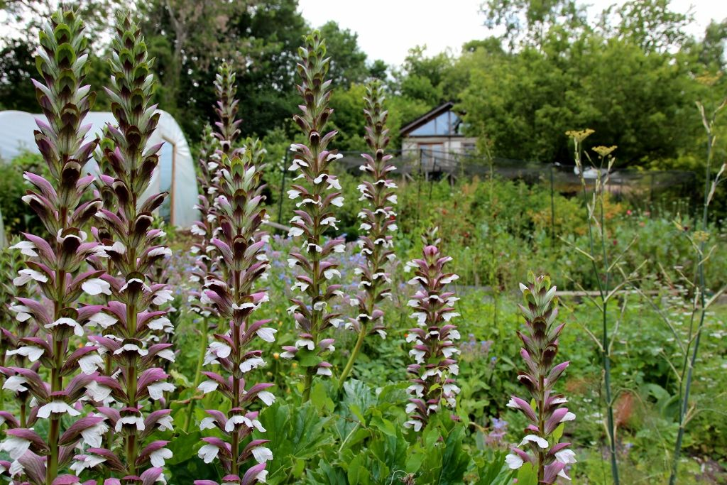 Moulsecoomb Forest Garden and Wildlife Project open day 2019
