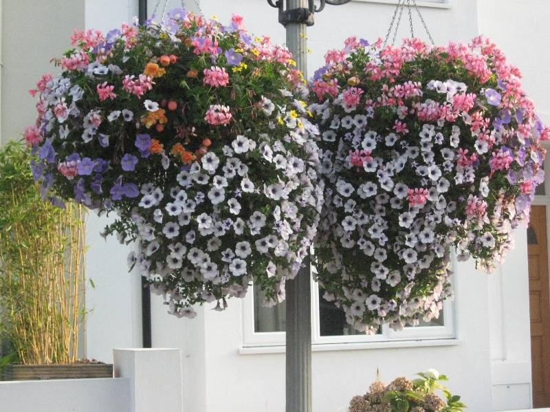 hanging baskets september 2014