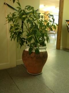 pots of talent first garden pot in situ at the bridge community centre